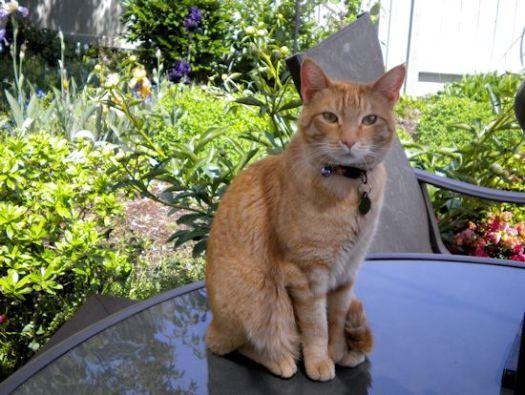 Raja Cat