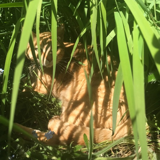 Hiding In Day Lilies