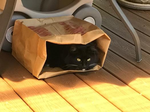 Zoe In Her Paper Bag