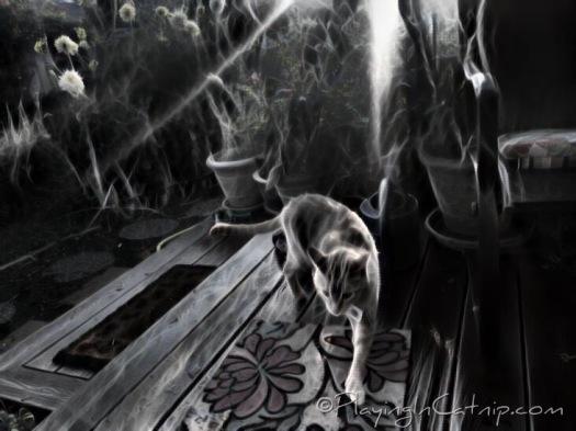 Dark Sunrise Raja Kitty