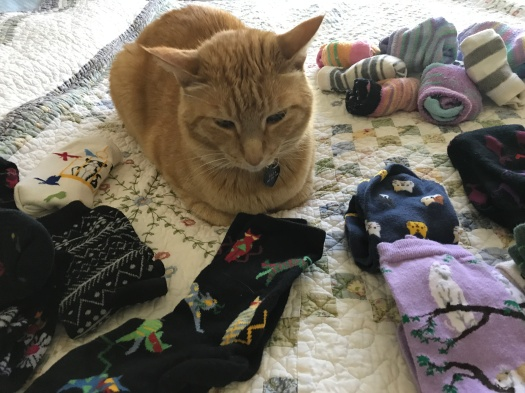 Raja Kitty Helping Mommy Sort Cat Socks