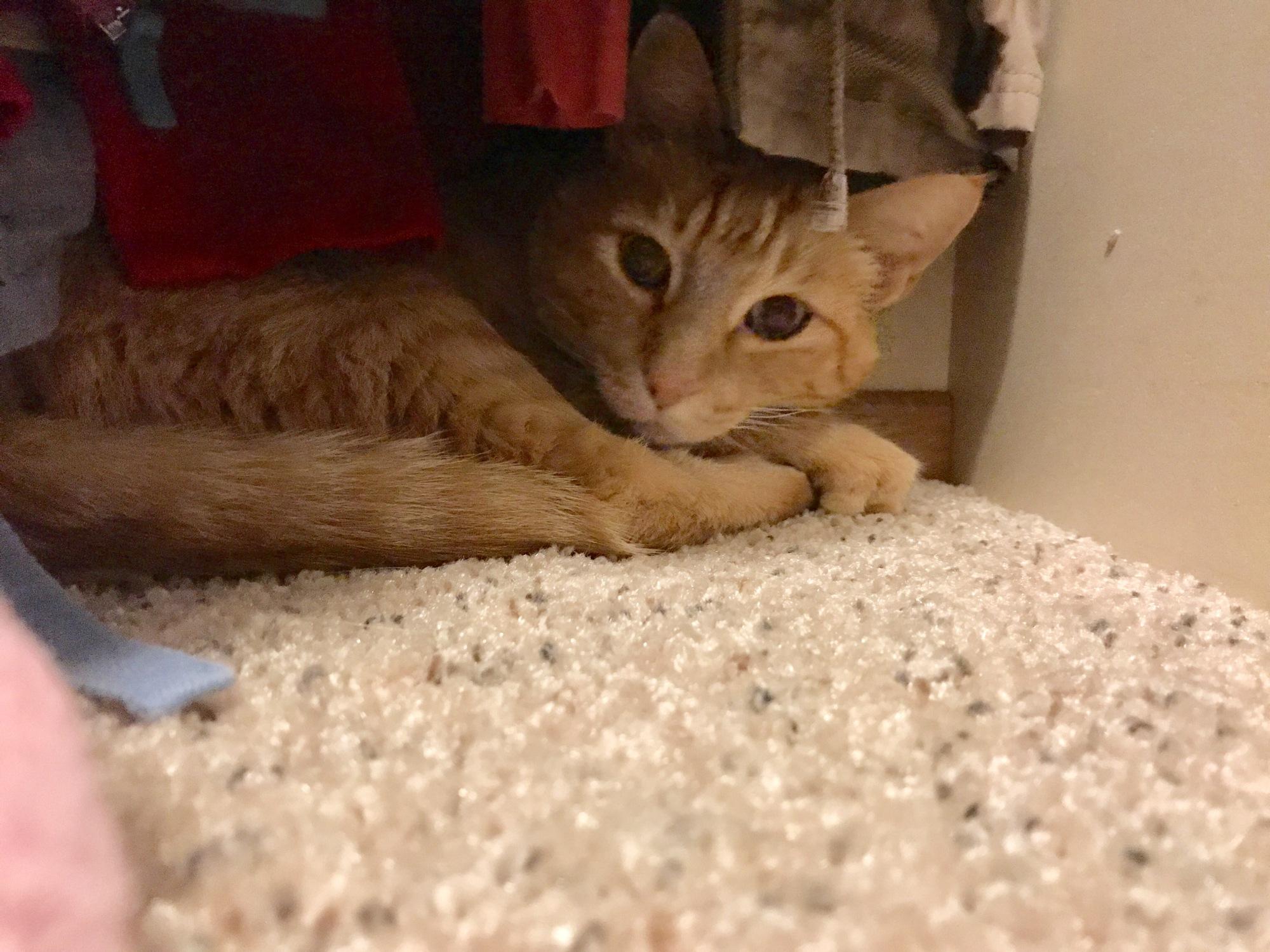 Raja Kitty Hiding In The Closet
