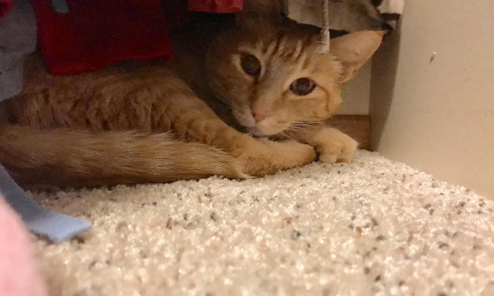 Raja Kitty Hiding In The Closet