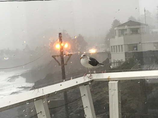 Seagull Waiting For Breakfast Original