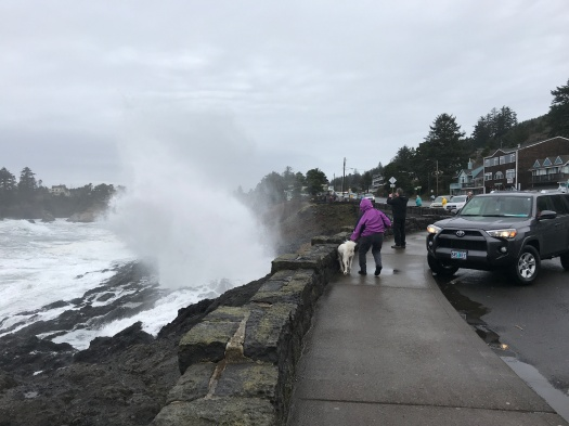 Poodle And Mom Sprayed At Blow Hole Original
