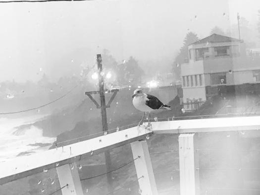 Seagull Waiting For Breakfast