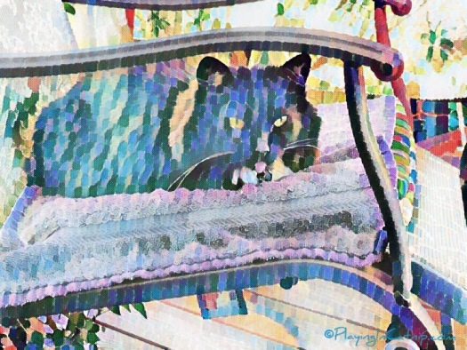 Beautiful Arty Zoe Kitty