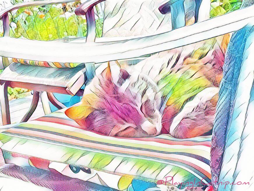 Sweet Arty Raja Kitty