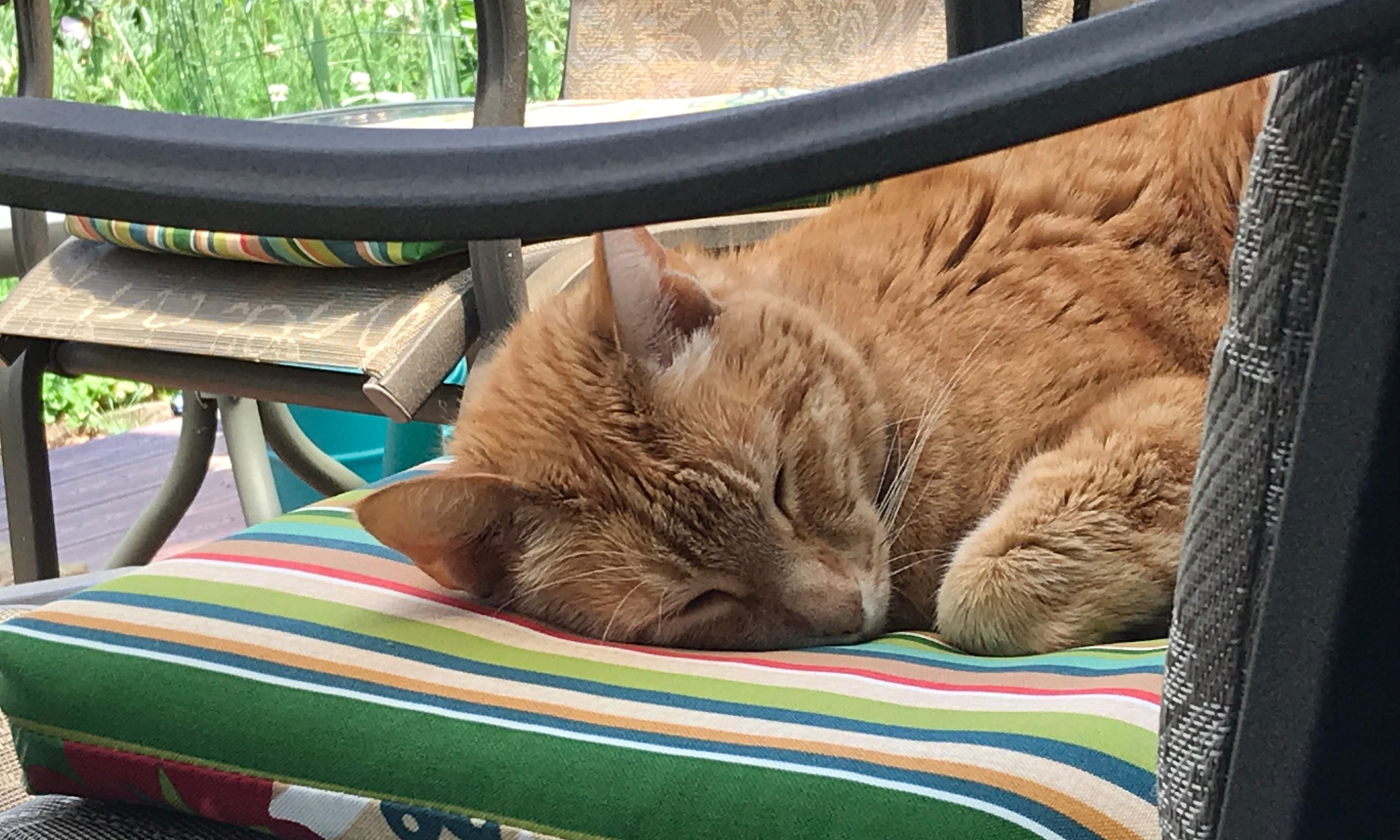 Awwww Sweet Raja Kitty